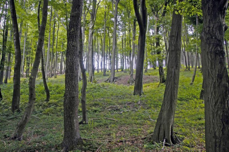Wald, Märkischer Kreis