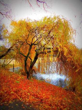 Weide am Orankesee
