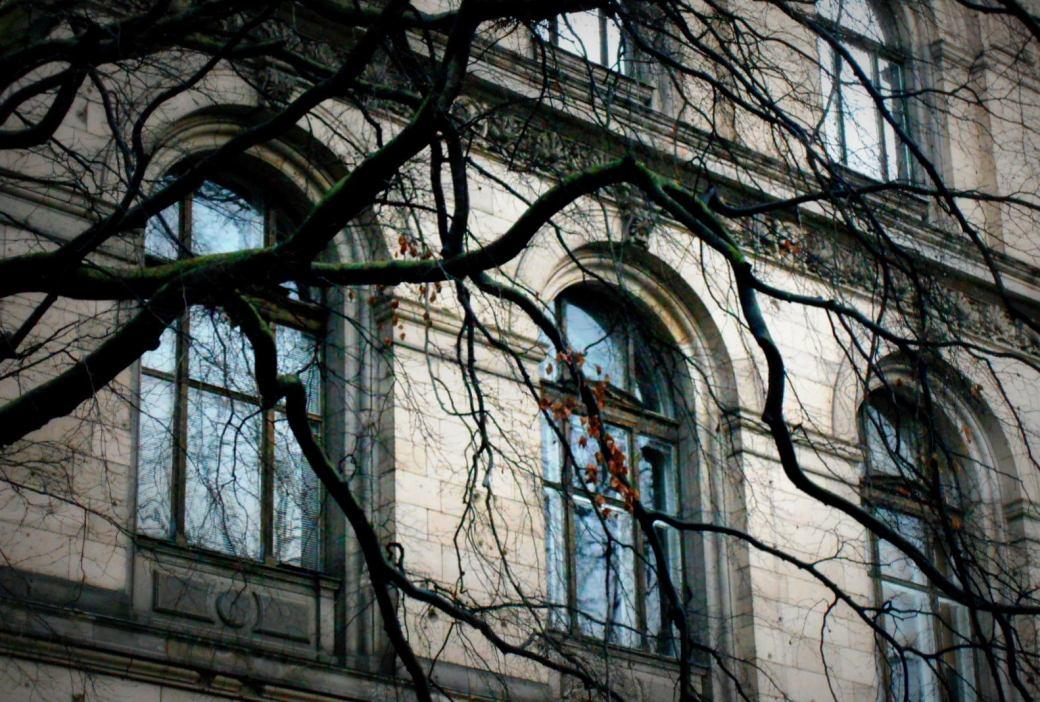 Fenster hinter Ästen