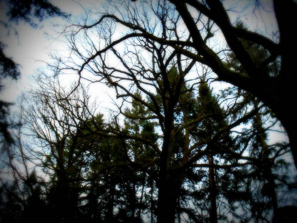 Bäume durcheinander