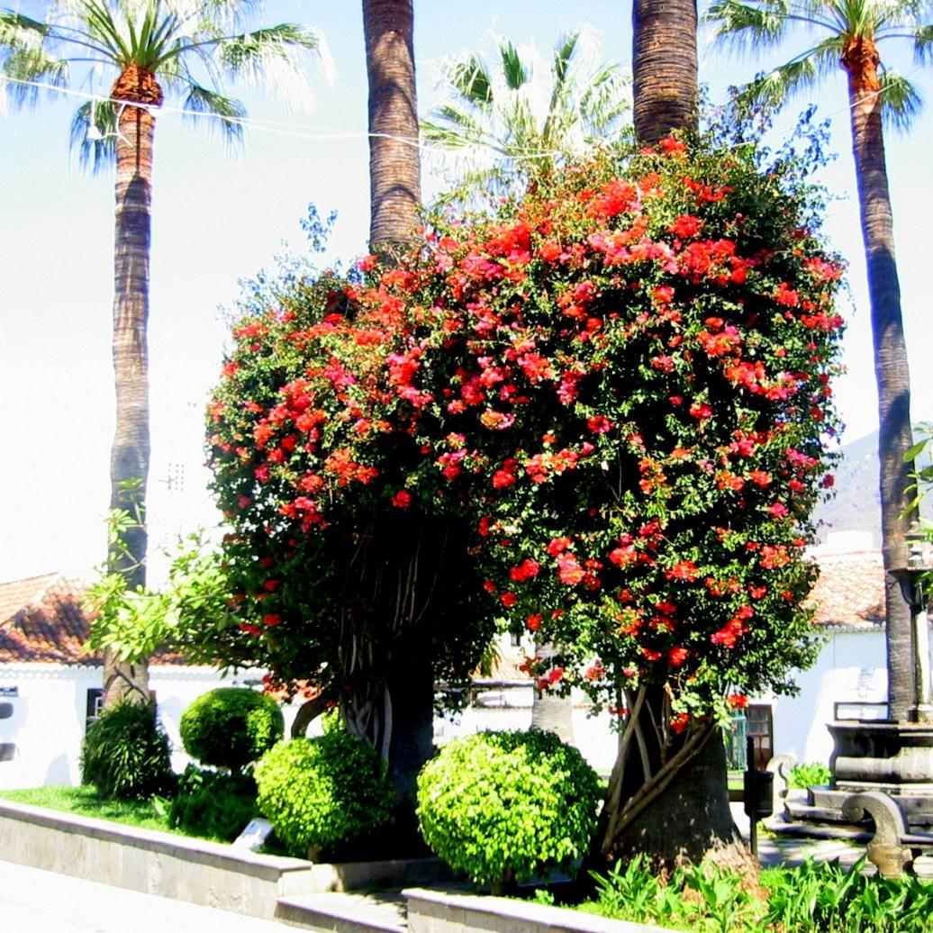 Blütenpracht La Palma