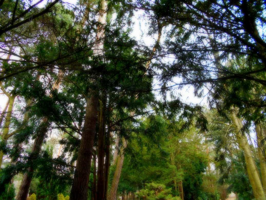Wald weichgezeichnet