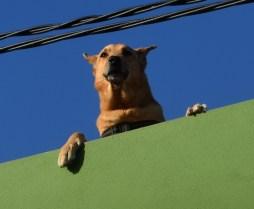 Auf dem Dach des Hauses