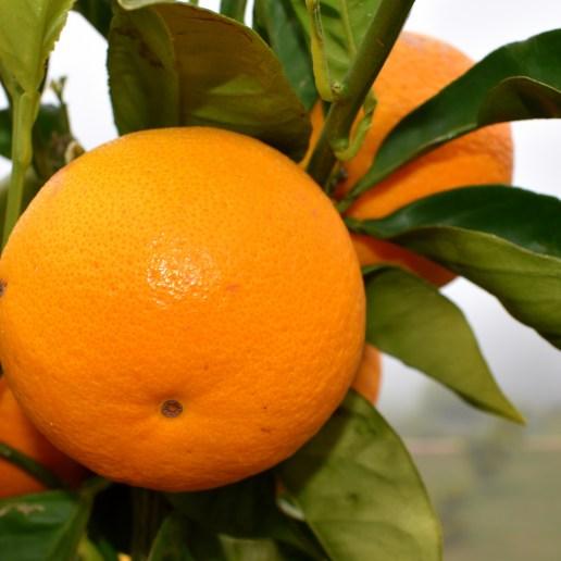 lecker orange - Kopie