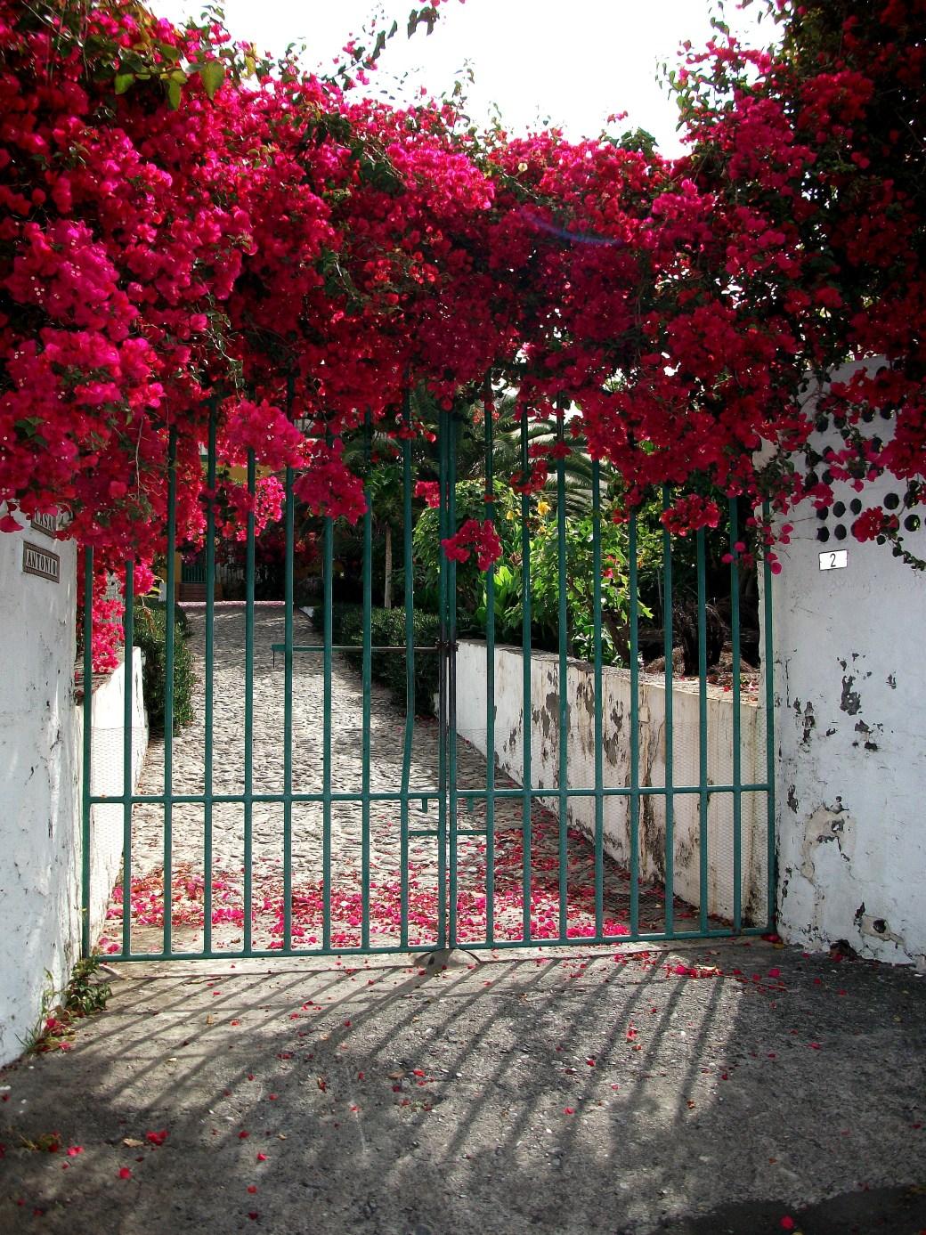 Mi Casa en La Palma