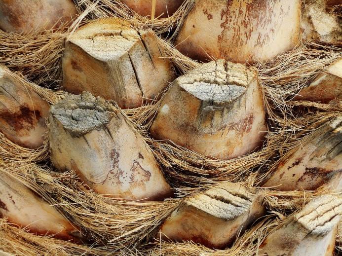 Palmenstamm - Kopie