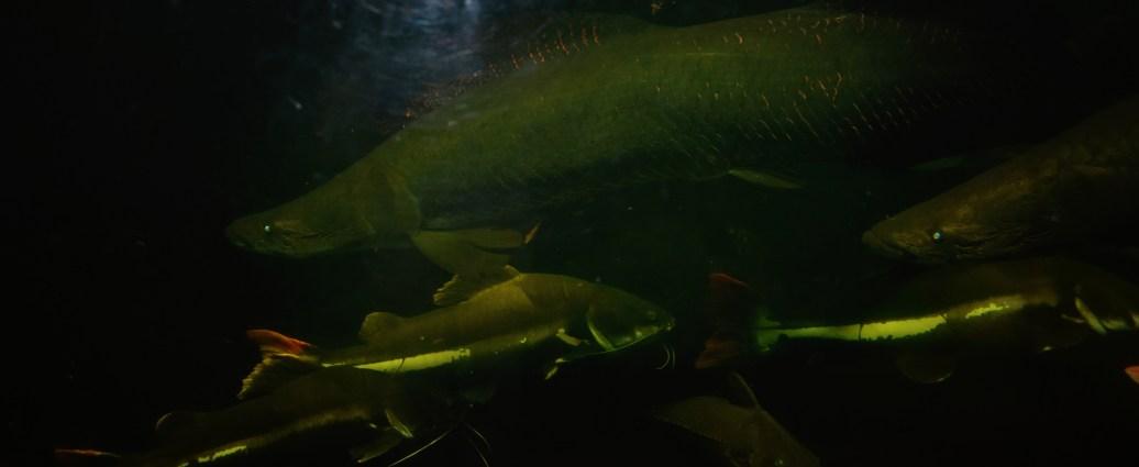 Unterwassergang