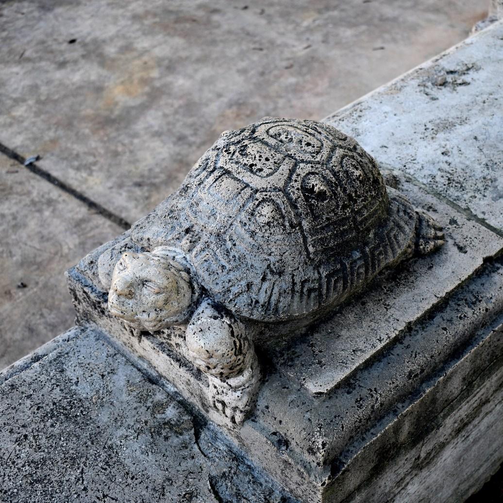 Schildkröte mit Menschenkopf