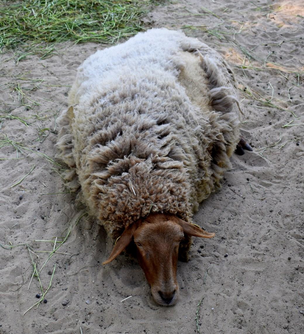 so heiß unter meiner Wolle
