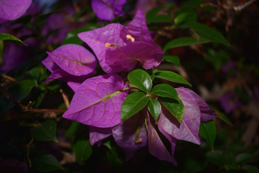 Blütentraum in lila