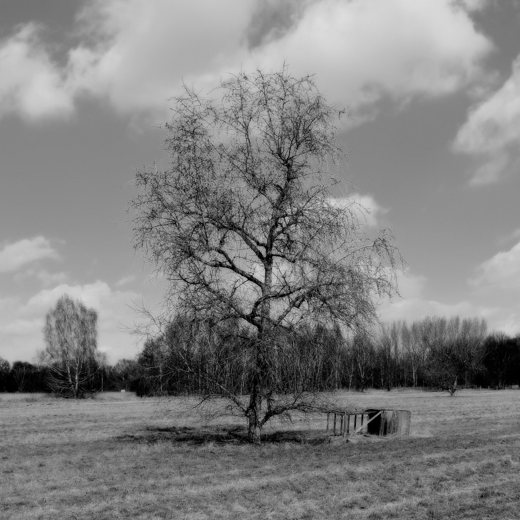 Landschaft sw