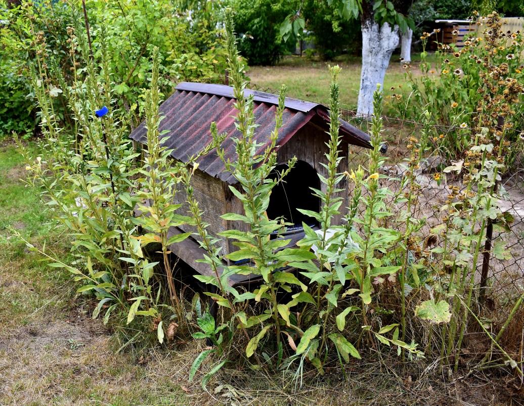 Gartenhaus für Igel und Co - Kopie