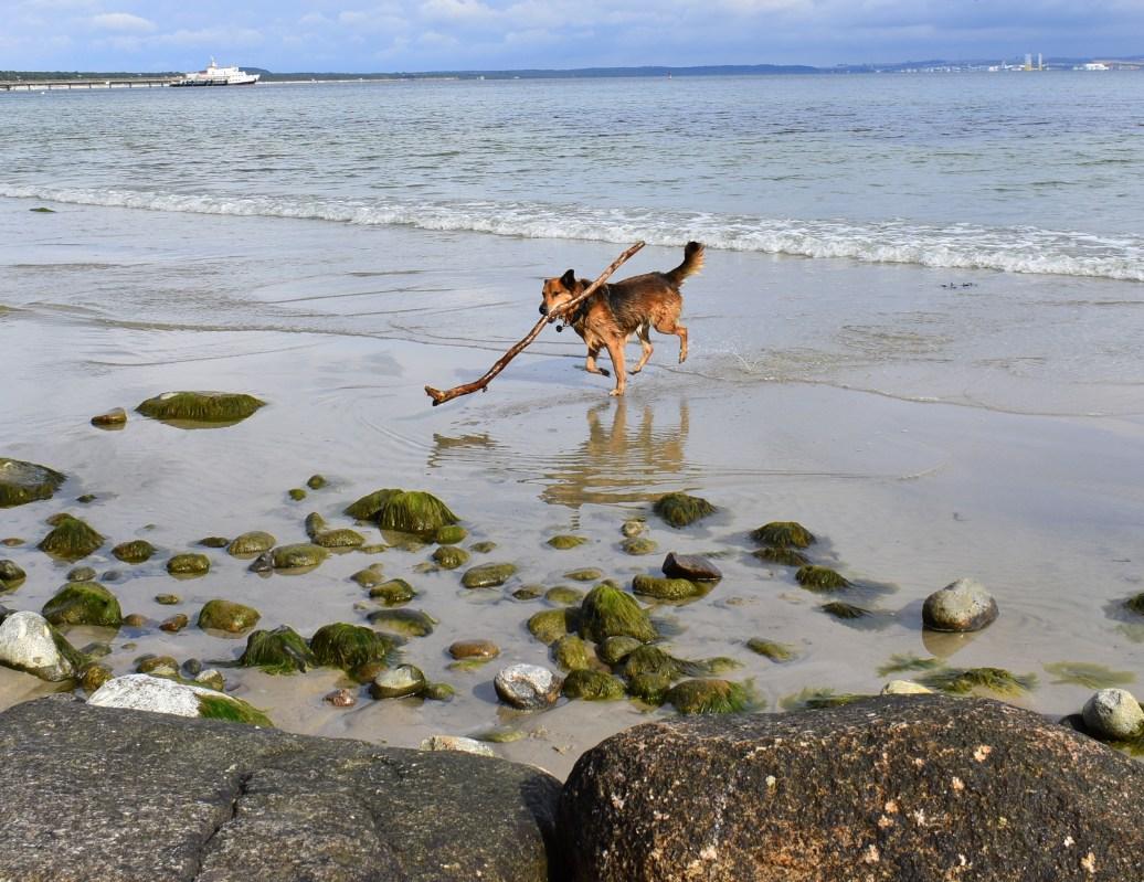 Paul im Wasser
