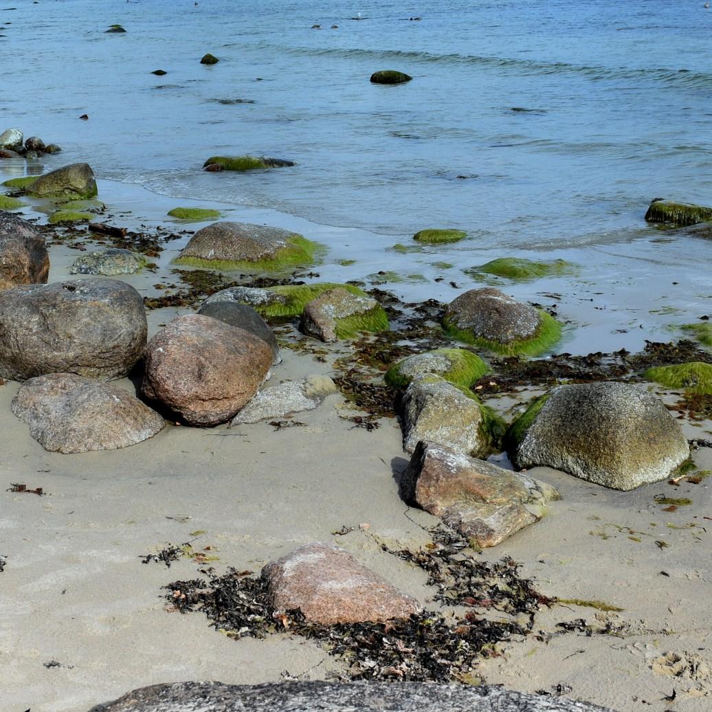 Steine und Algen