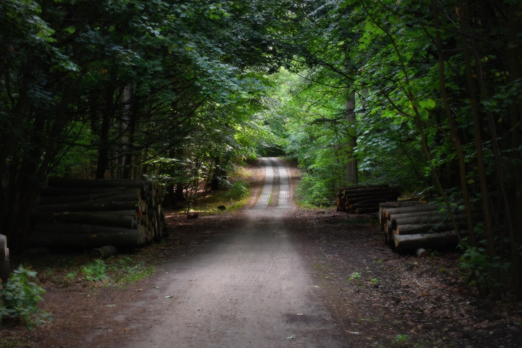 Waldweg zum Strand