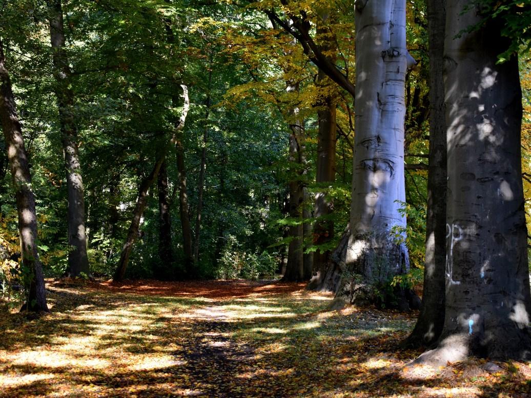 Wald im Schlosspark
