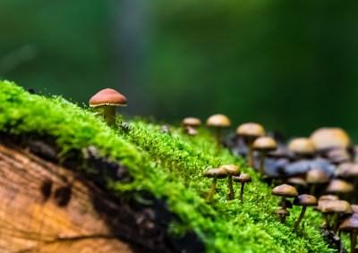 Umwelt und Nachhaltigkeit die Ökologie
