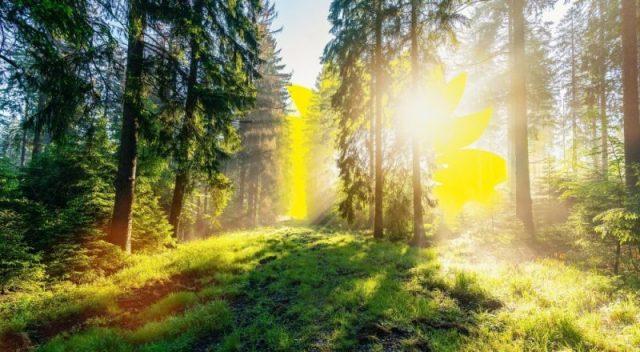 Hinter dem Wald geht die Sonne in Form einer Sonnenblumenblüte auf