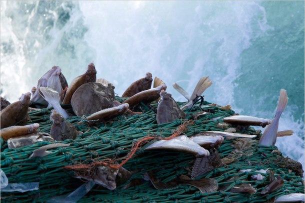 Erfolgreicher Fang: Fischerei und Überfischung sind erst in den letzten Jahren zu einem größeren Medienthema geworden (Quelle: Torsten Schäfer)