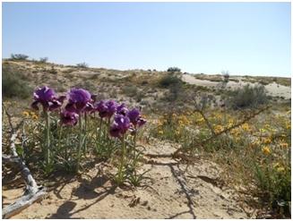 Wüste lebt