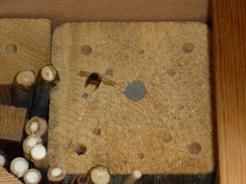Eine Biene im Anflug auf das Insektenhotel. Aus den mit Lehm verstopften Löchern werden bald junge Bienen schlüpfen.