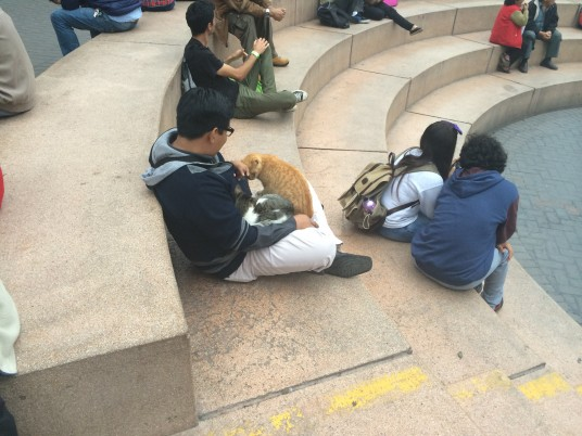 Cats mingling with people at Kennedy Park in Lima