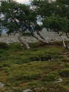 Oasen. En liten vegetasjonsamlig og et lite tjern over tregrensa.
