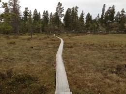 T-stien mot Røvolshytta