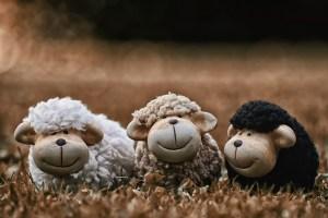sheep, animals, deco