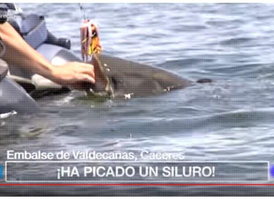 pesca-siluro-pato-tve1