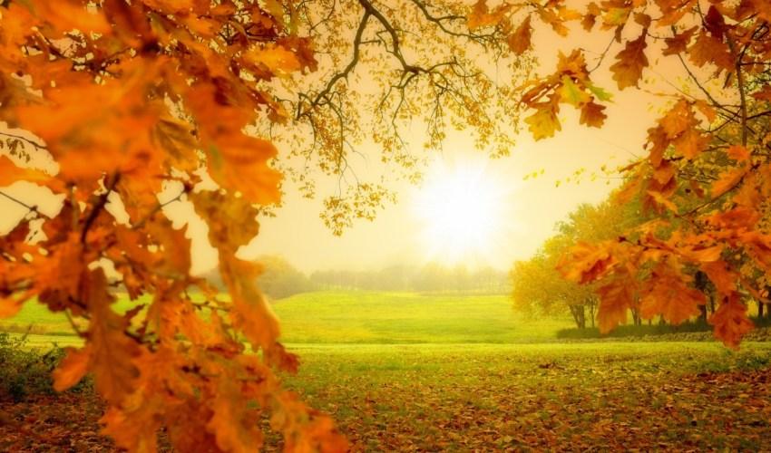 imagen otoñal de un prado verde cubierto de hojas de un tono caramelo bajo un cielo amarillento