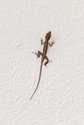 una lagartija pegada a una pared blanca
