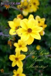 muttertagskarte-narzissen-gelb