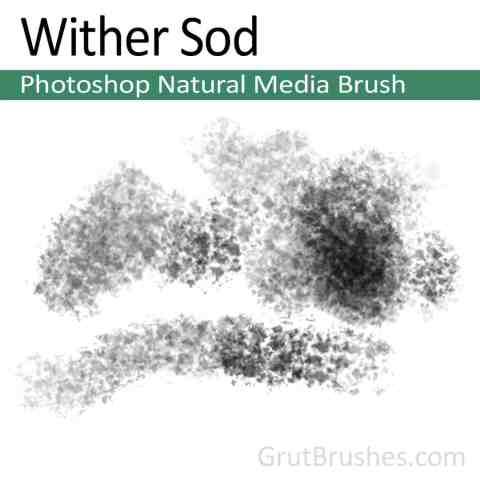 Photoshop Natural Media Brush for digital artists 'Wither Sod'