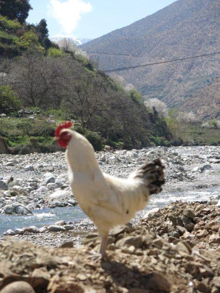 221. En hane