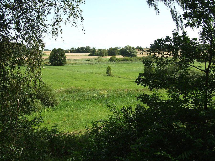 widok z leśnego zagajnika na nadwełniańskie łąki