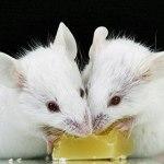 Невкусная еда оказалась «по нраву» мозгу