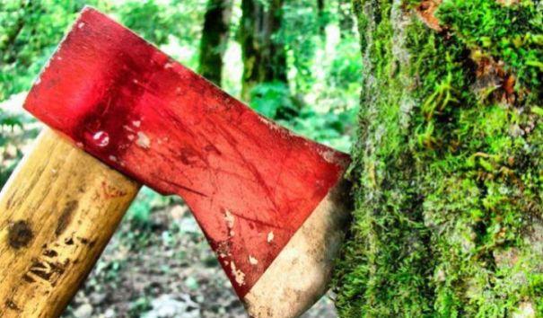 """Гринпис России: проект """"лесной амнистии"""" нуждается в существенной переработке"""
