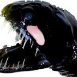 Ученые выяснили причину прозрачности зубов глубоководных рыб-иглоротов