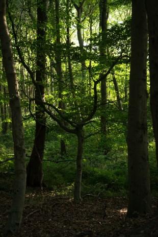 Robin Wood, Derbyshire 01