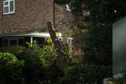Conifer Removal, Melbourne 04
