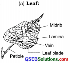 GSEB Solutions Class 6 Science Chapter 7 Getting to Know Plants