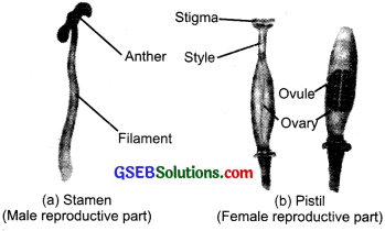 GSEB Solutions Class 7 Science Chapter 12 Reproduction in Plants