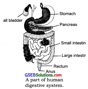 GSEB Solutions Class 7 Science Chapter 2 Nutrition in Animals