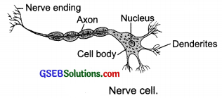 GSEB Solutions Class 8 Science Chapter 8 Cell Structure and Functions