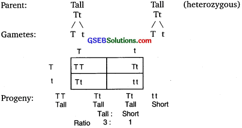GSEB Solutions Class 10 Science Chapter 9 Heredity and Evolution