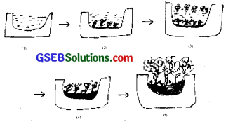 GSEB Solutions Class 12 Biology Chapter 14 Ecosystem 4