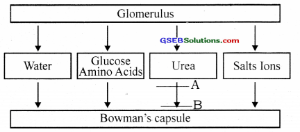 GSEB Solutions Class 12 Biology Chapter 3 Human Reproduction 25