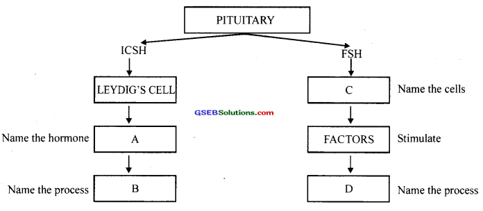 GSEB Solutions Class 12 Biology Chapter 3 Human Reproduction 30