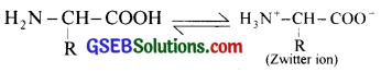 GSEB Solutions Class 12 Chemistry Chapter 14 Biomolecules 5
